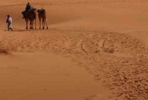 Le Sahara est un grand cimetière