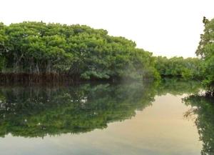 Le dédale des mangroves