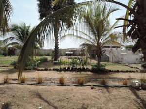 Une partie des jardins de Kaydara 1