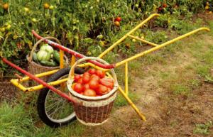 broucyclette